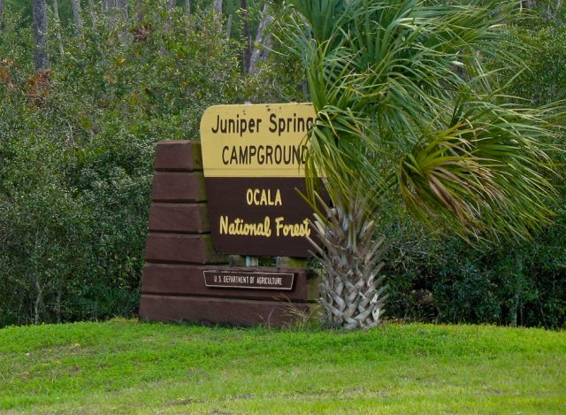 Ocala National Forest Free Camping in Florida