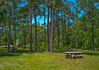Ocala National Forest Free Tent Camping in Florida
