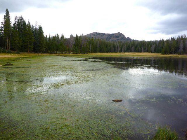 Lily Lake Utah