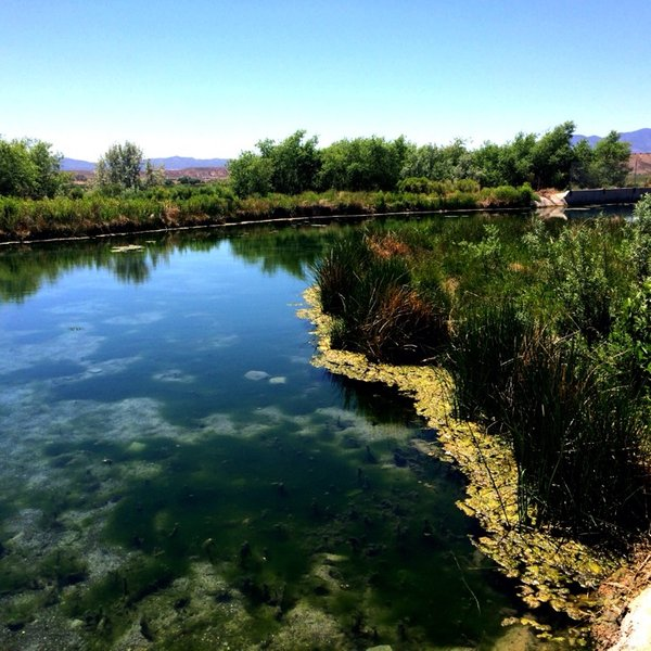 Panaca Hot Springs in Nevada