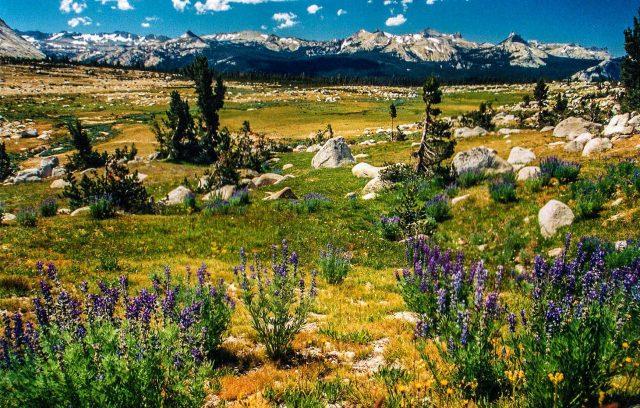 Tuolumne Meadows Yosemite Hiking Trail