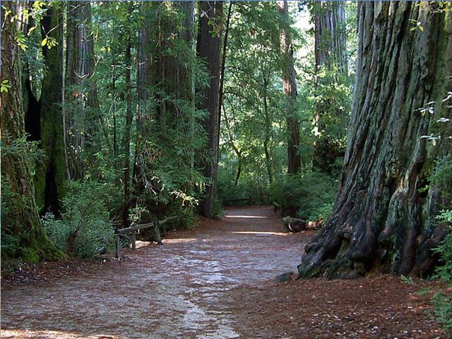 Big Basin Redwoods State Park Weekend Camping Trips from San Francisco