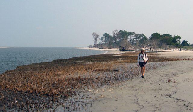Cabretta Georgia Beach Sapelo Island GA