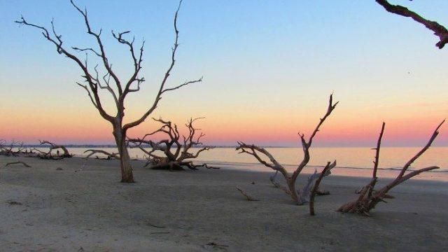 Driftwood Georgia Beach North of Jekyll Island