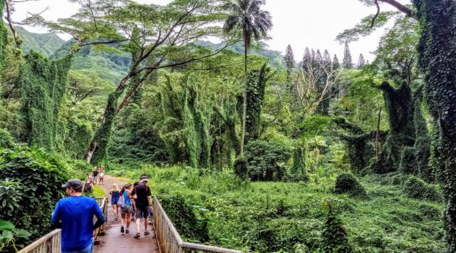 Manoa Best Waterfall Hikes in Oahu