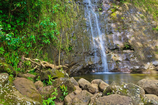 Manoa Waterfall Hikes in Oahu Hawaii