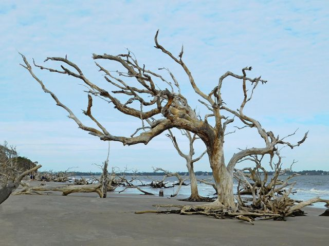 Jekyll Island Beaches Near Atlanta