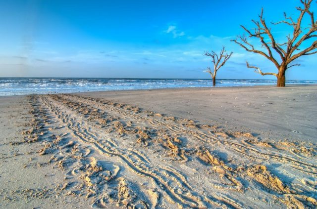 Edisto Best Beach in South Carolina
