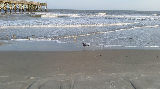 Sullivan's Island Best Beach Vacation Spots in South Carolina