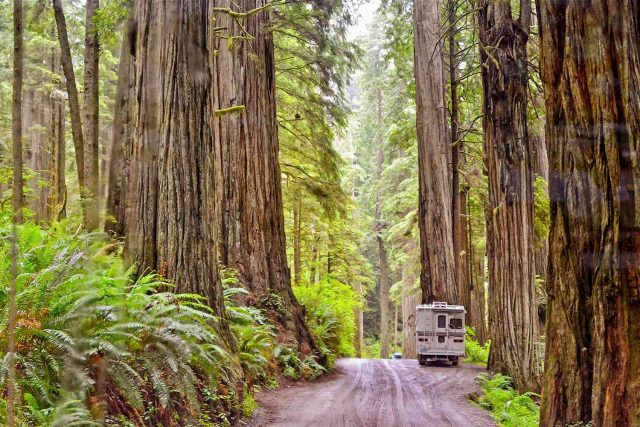 Jedediah Smith State Park Camp in Northern California