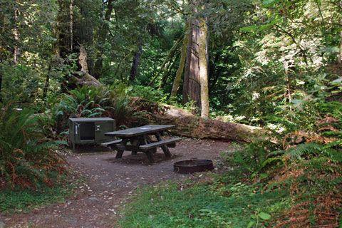 Jedediah Smith State Park Camping Spot in Northern Carolina