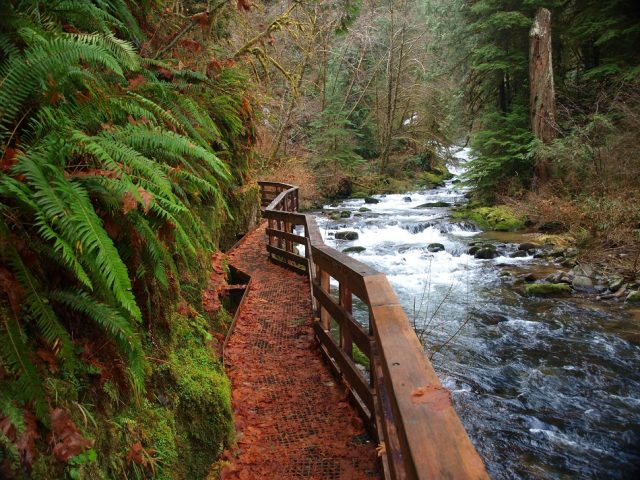 Sweet Creek Western Oregon Waterfalls