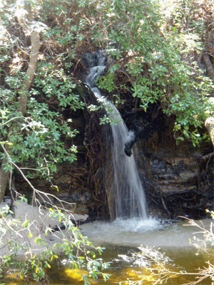Florida Trail Falls
