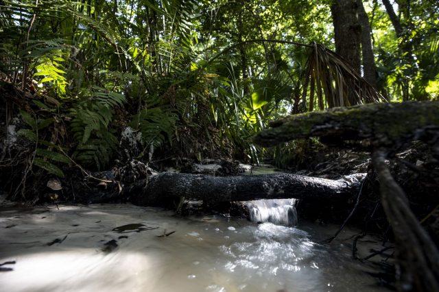 Hidden Waters Preserve in Florida