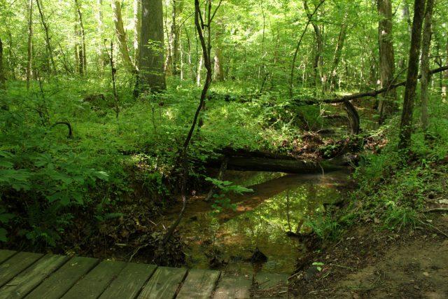 Johnston Mill Natural Preserve in Northern North Carolina