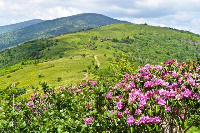 Roan Mountain Gardens Trailin Western North Carolina