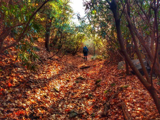 Bartram Trail in Northern Georgia